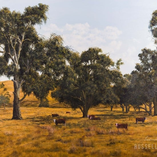 Cattle Paddock - Yea, Victoria